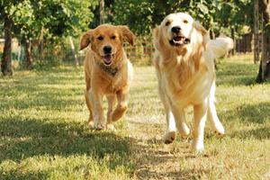 banca del sangue canino, per la salute dei cani