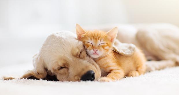 La leptospirosi nei cani e nei gatti, un progetto di ricerca IZSVe