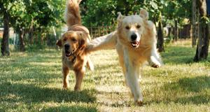 Banca del sangue canino: FAQ donatori