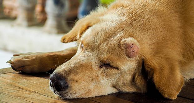 Registro tumori animali, il progetto dell'IZSVe