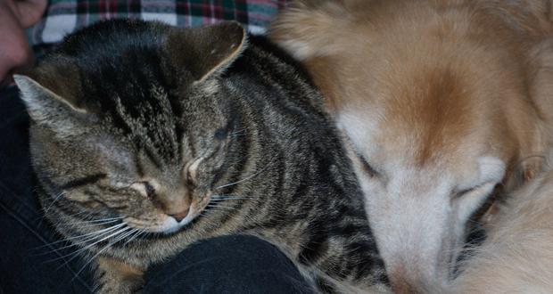 Leptospirosi nel cane e nel gatto in Veneto