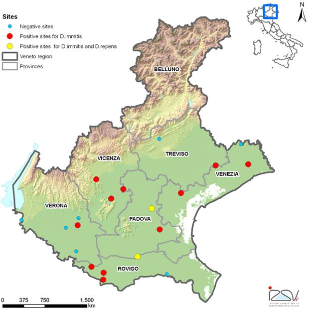 Ricerca e monitoraggio sulle dirofilarie in Veneto
