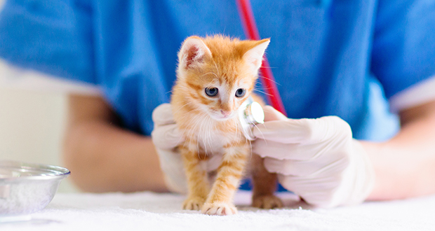 Parassiti dei gatti: scoperte due nuove specie
