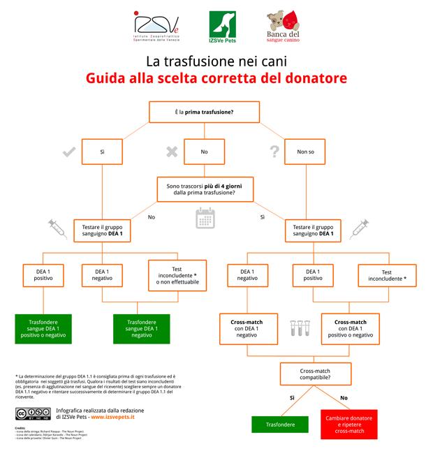 La trasfusione nei cani: guida alla scelta corretta del donatore [Infografica]
