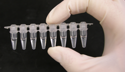 provette per PCR