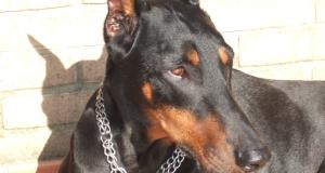 Registro tumori animali: i numeri del cane