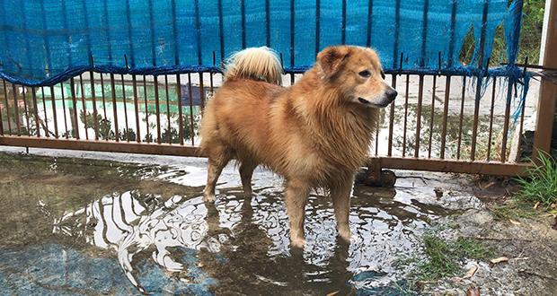 Tempo di alluvioni, rischio leptospirosi