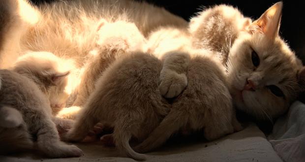 La Febbre Q nel cane e nel gatto: questa sconosciuta