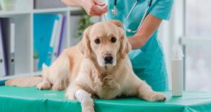 """Leishmaniosi canina: vaccinazione solo per i cani """"veramente """" sieronegativi"""