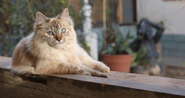leishmaniosi nel gatto informazioni e consigli per i