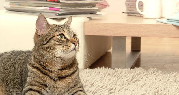 Il gatto, questo sconosciuto: nuova rubrica su IZSVe Pets