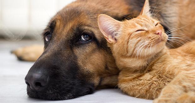 Gatto e cane: un esempio di collaborazione interspecifica