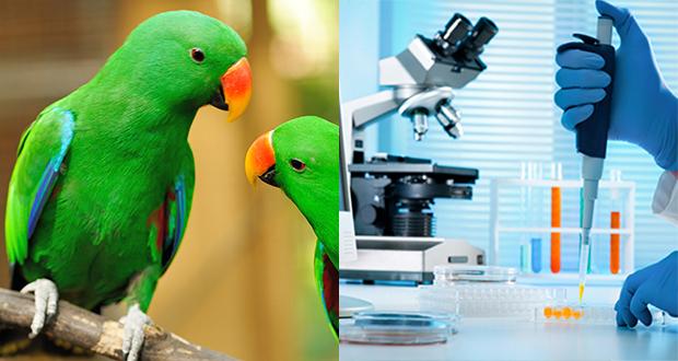 Gestione del campione per esami virologici nei pet birds