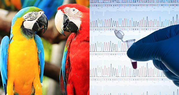Gestione del campione per esami biomolecolari nei pet birds