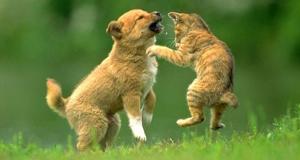"""Il gatto non è un cane"", corso ECM a Verona"