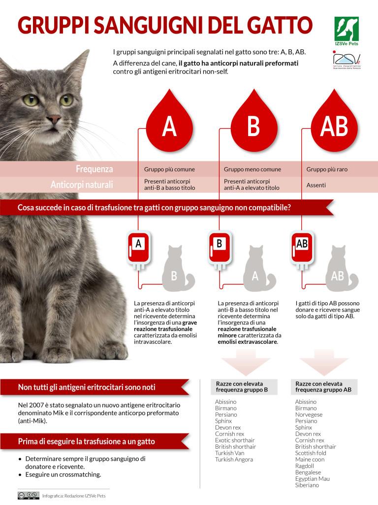 Gruppi sanguigni del gatto | Infografica