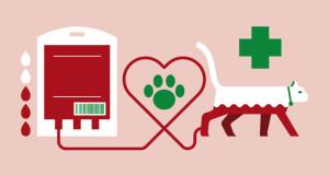 Gruppi sanguigni del gatto. Disponibile il test presso l'IZSVe [Infografica]