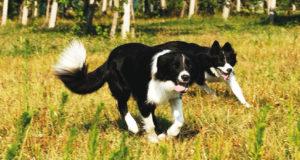 L'echinococcosi nel cane [Opuscolo]