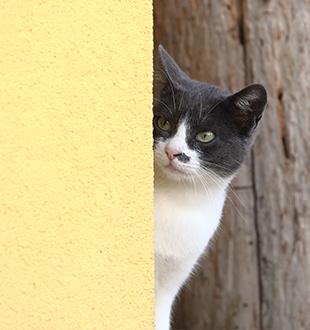 Gatto sospettoso con gli estranei