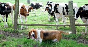 Neosporosi nel cane: seminario a Legnaro (PD) venerdì 21 aprile 2017