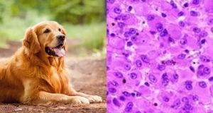 Caratterizzazione genetica del melanoma orale del cane