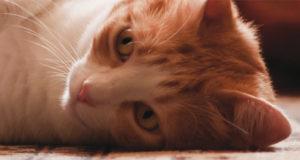 Corso ECM / Medicina veterinaria trasfusionale felina. Conoscere per saper fare