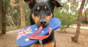 Indicazioni per l'esportazione di animali da compagnia verso l'Australia
