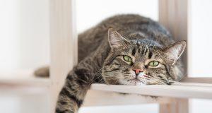 «Ai gatti ricchi la passerella, ai gatti poveri la libertà». Parte 1 (Aspetti di convivenza)