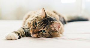 «Ai gatti ricchi la passerella, ai gatti poveri la libertà». Parte 2 (Aspetti sanitari)