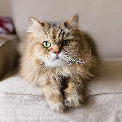 Gatto in appartamento