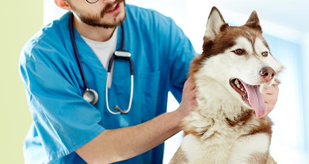 Banca del sangue canino IZSVe, evento di presentazione il 17 aprile a Rovigo