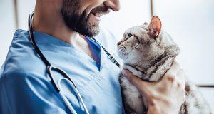 Il diabete felino: l'approccio comportamentale in aiuto della terapia medica