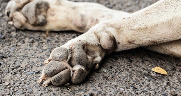 Corso ECM / Avvelenamenti animali. Un decennio di applicazione di misure nazionali di controllo