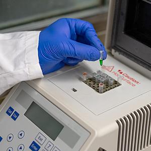 Esame PCR Panleucopenia felina