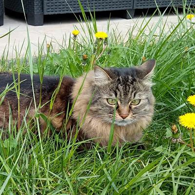 gatto che difende territorio