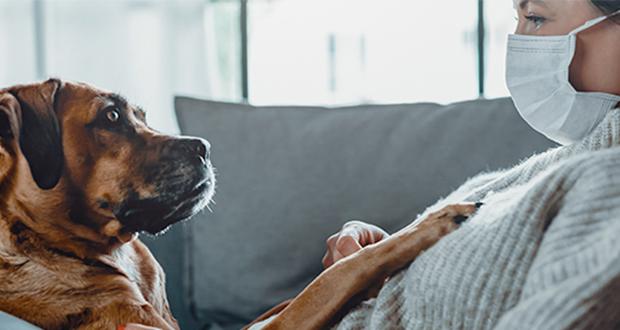 Emergenza COVID-19. Linee guida per la gestione di animali da compagnia sospetti di infezione