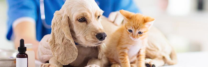 Veterinaria animali da compagnia