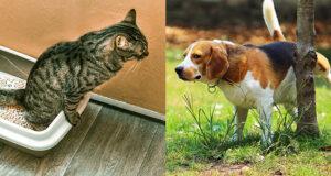 Infezioni del tratto urinario (UTI) negli animali da compagnia [Percorsi diagnostici]