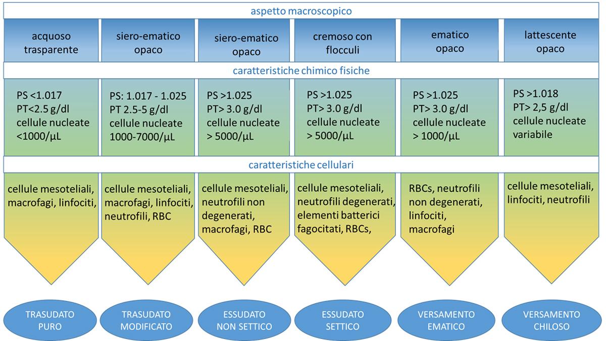 Schema di classificazione dei versamenti